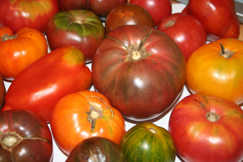 Image result for jersey heirloom tomatoes